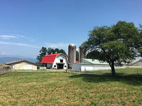 長野 安曇野 北アルプス牧場|牧場風景