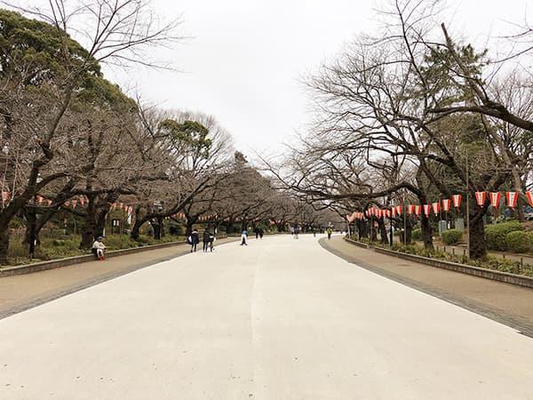 東京 上野 韻松亭|さくら