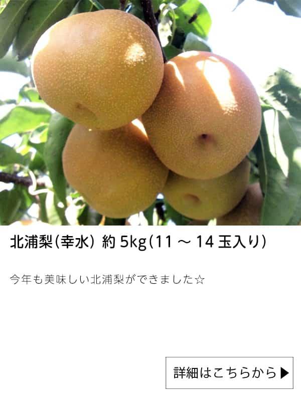 北浦梨(幸水) 約5kg(11~14玉入り)|JAタウン